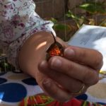 Holly, Hummingbird field work