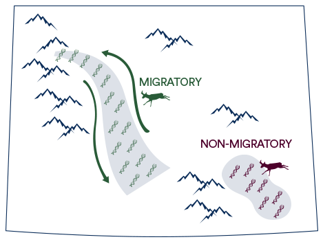 We use population genomics to investigate genetic differences among individuals in a population that have different seasonal migration strategies (i.e., migrants and non-migrants). Previous research has shown genetic segregation between migrants and non-migrants in the Yellowstone pronghorn population (Barnowe-Meyer et al. 2013).