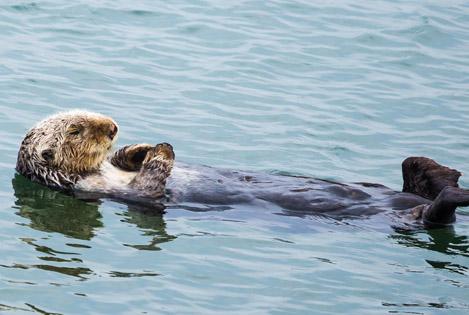 otter-news