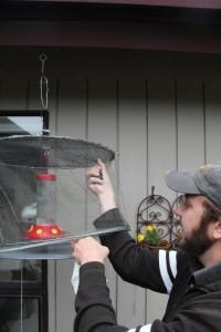 Brady gently lifting net to capture hummingbird