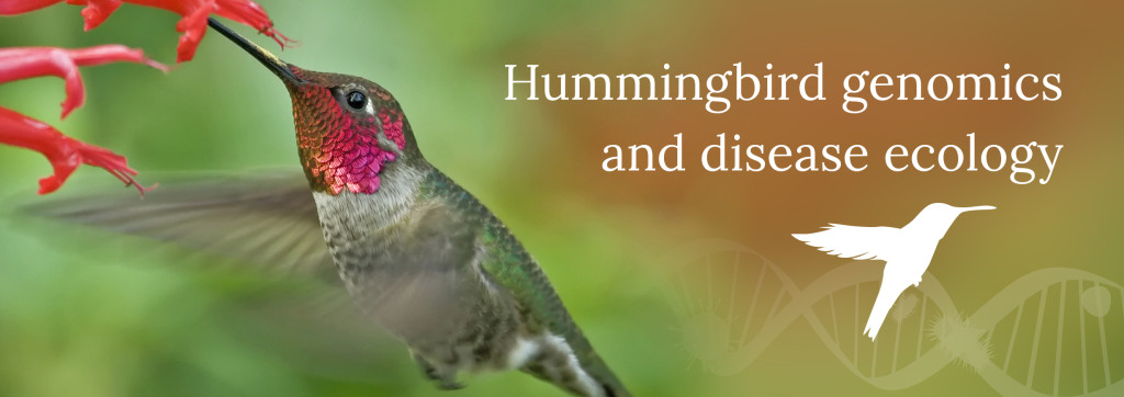 Hummingbird genomics and disease ecology