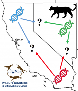DNA icons and mtn lion with arrows over California and Nevada