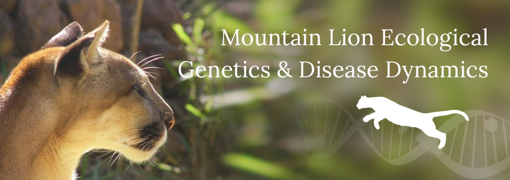 Mountain Lion Ecological Genetics and Disease Dynamics