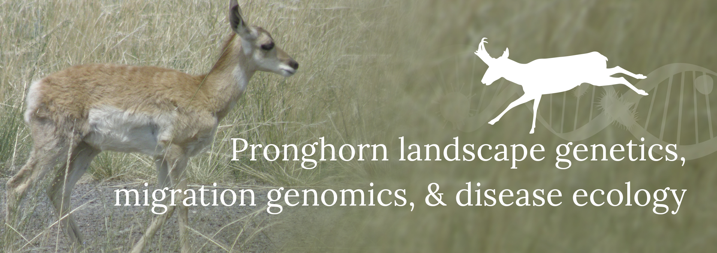 Pronghorn landscape genetics, migration genomics, and disease ecology