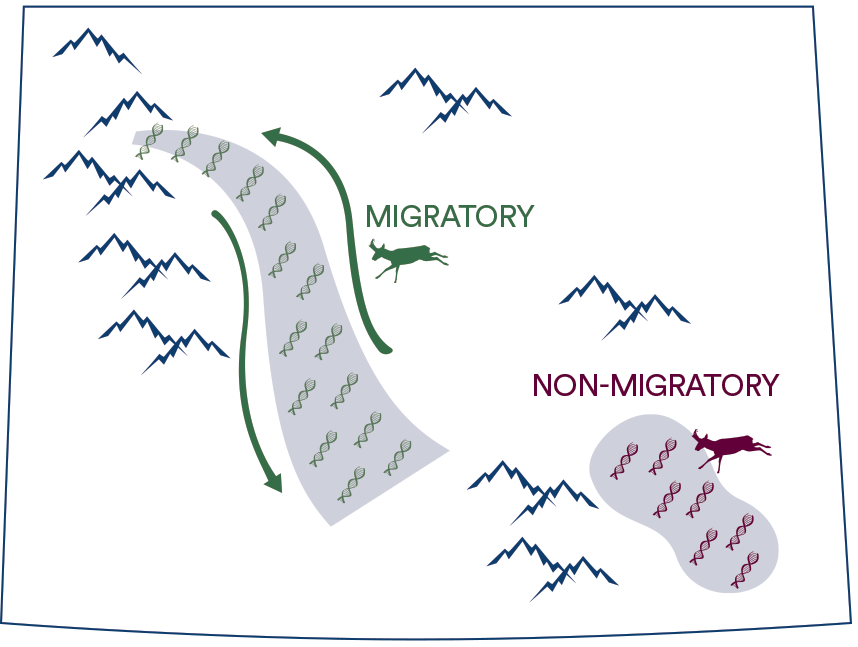 Migratory and non-migratory movement patterns