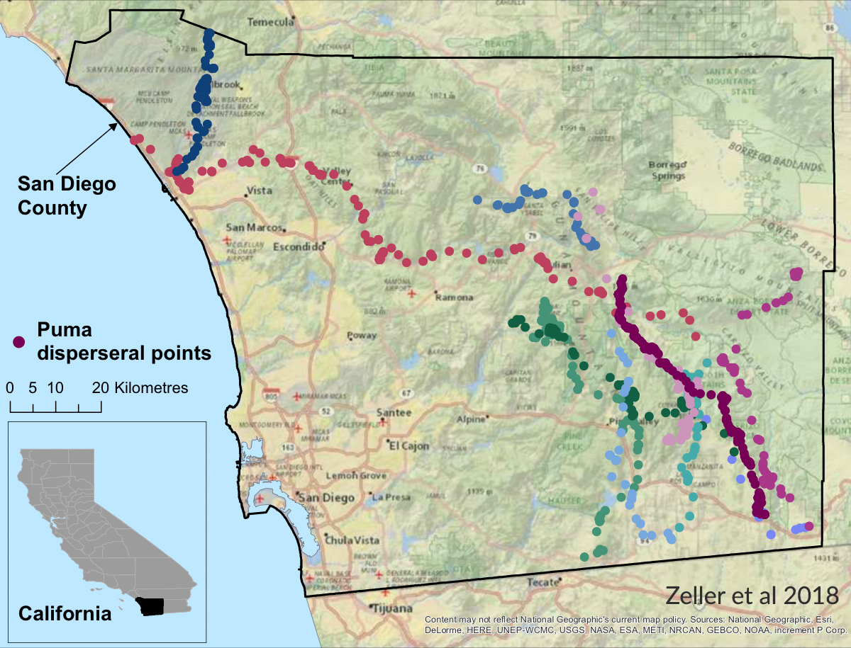 Puma disperseral points in San Diego County, California: Zeller et all 2018