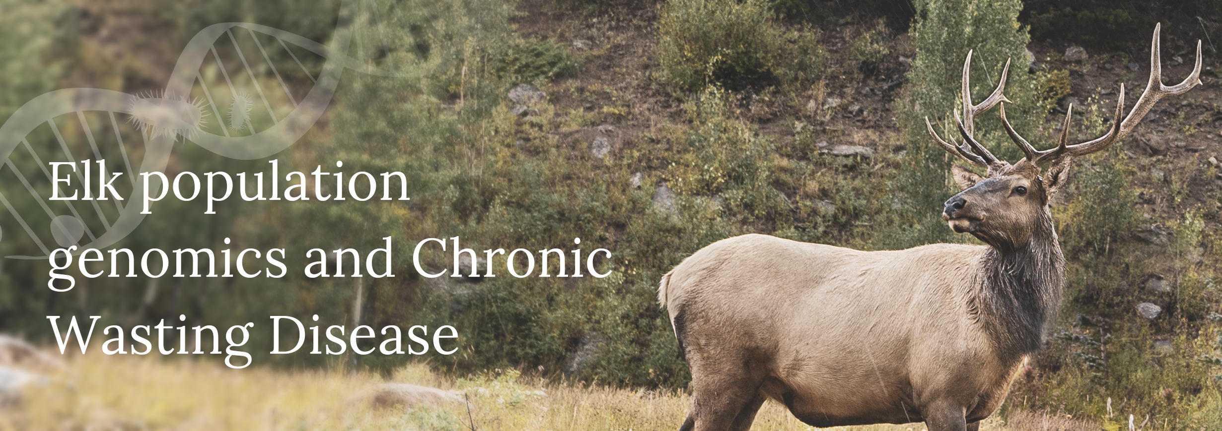 Elk in mountains with Elk population genomics and Chronic Wasting Disease text